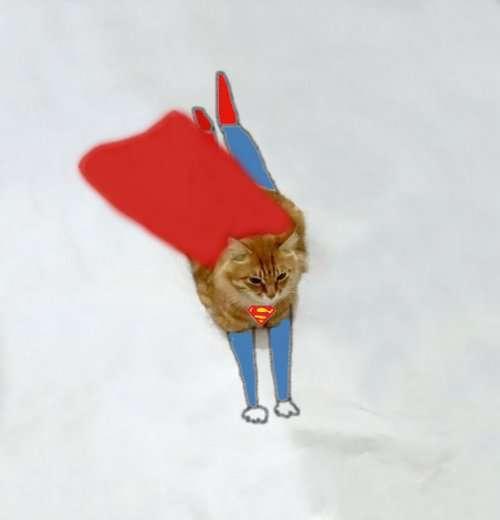 Тайная жизнь кошек, о которой вы не знали (25 фото)