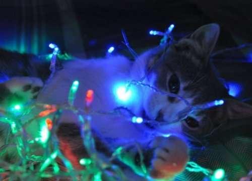 Самые новогодние кошки (10 фото)