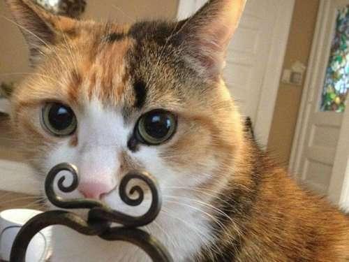 Смешные стоп-кадры с кошками (19 фото)