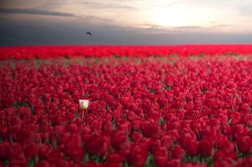Мир прекрасен и без фотошопа (24 фото)