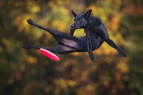 Летающие собаки в фотопроекте Клаудио Пикколи (25 фото)