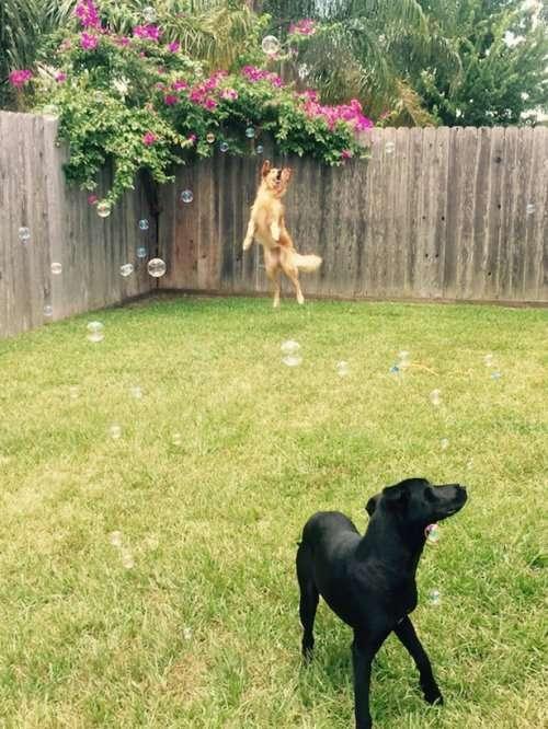 Очаровательные собаки, которые поднимут вам настроение (28 фото)