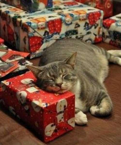 Кошки и новогодние подарки (10 фото)