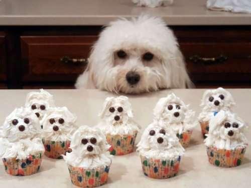 Шедевры кулинарного искусства: кексы (37 фото)