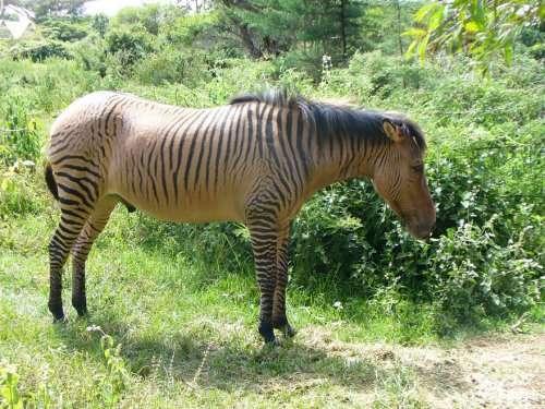 Топ 18: Гибридные животные, в существование которых трудно поверить