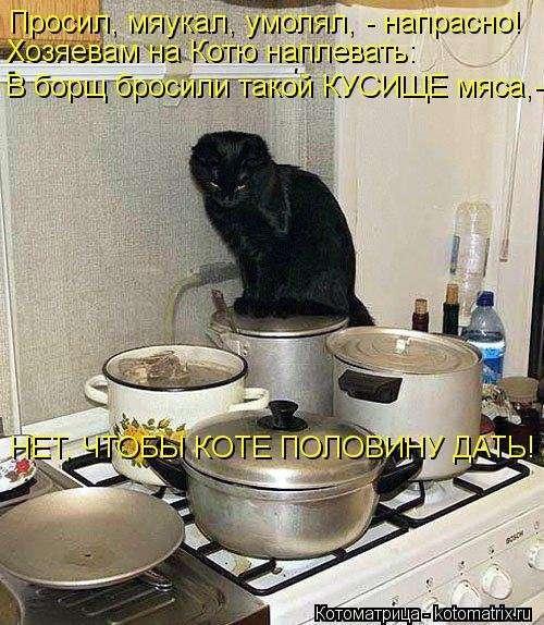 Новая котоматрица для хорошего настроения (33 фото)