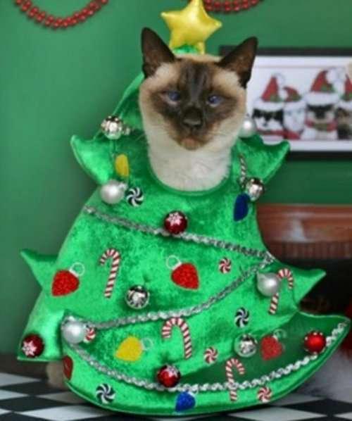 Забавные кошки в праздничных костюмах новогодней ёлки (10 фото)