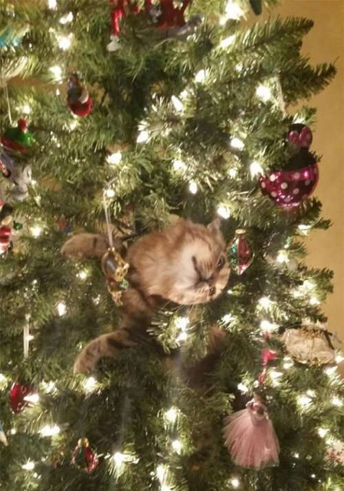 Кошки на новогодних ёлках (31 фото)