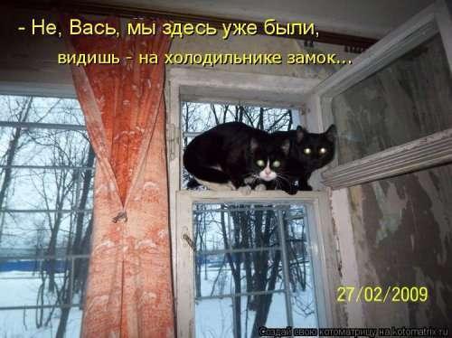 Новая котоматрица на Бугаге (31 фото)