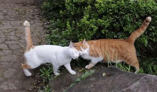 Топ 25: Странные и интересные факты про кошек