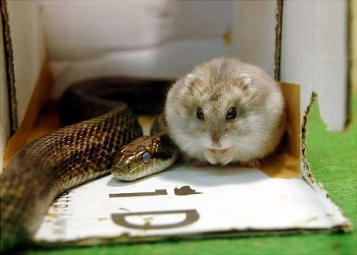 Невероятные примеры дружбы между животными (23 фото)
