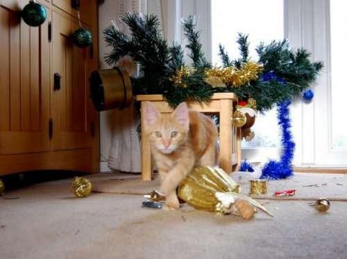 Разрушители новогоднего настроения (17 фото)