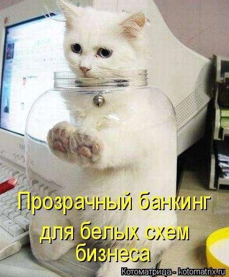 Новая котоматрица для хорошего настроения (32 фото)