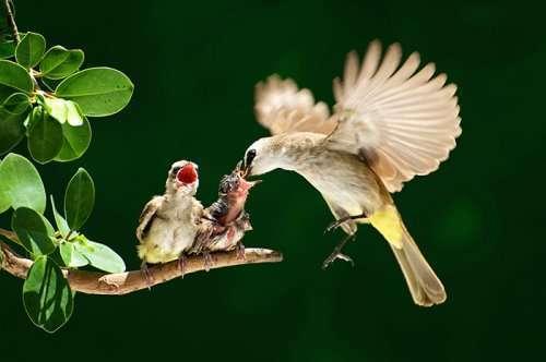 Птицы со своими птенцами (25 фото)