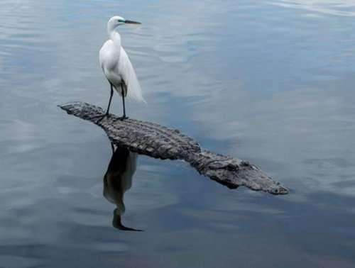 Животные, в которых веры в себя больше, чем они сами (13 фото)