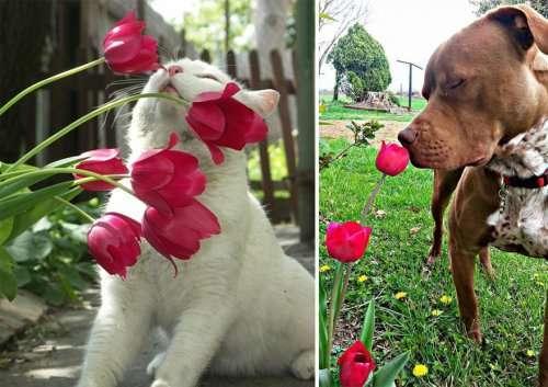 Очаровательные животные, нюхающие цветы, покорят ваше сердце (34 фото)