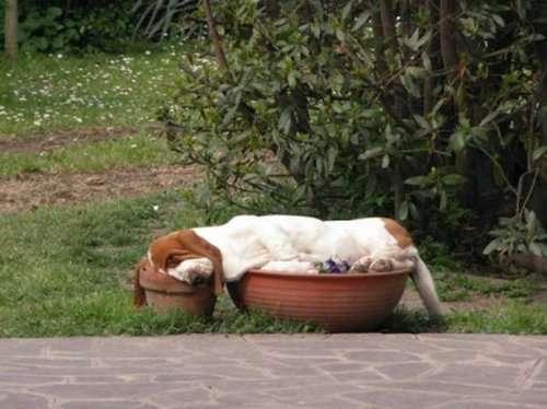Спящие собаки (30 фото)