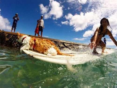 Одноглазый кот-сёрфингист рассекает гавайские волны (11 фото)
