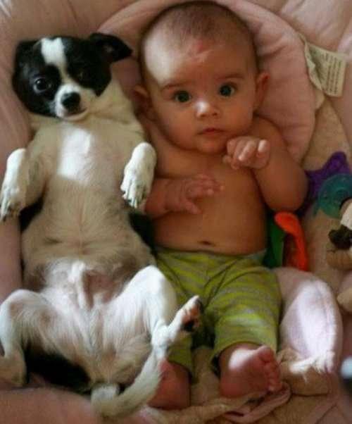 Малыши и собаки, похожие как две капли воды (10 фото)