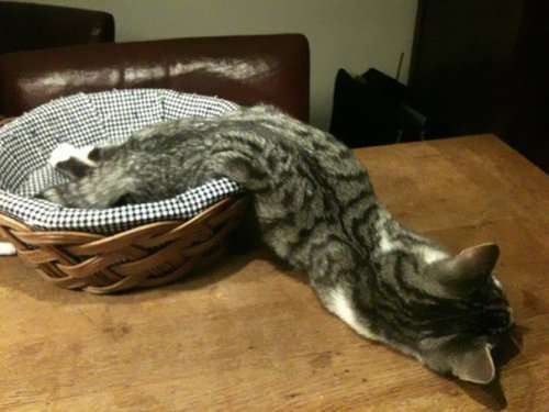 Домашние животные, уснувшие в самых неожиданных местах и позах (37 фото)