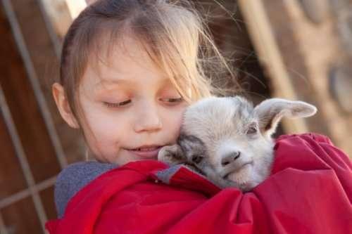 Ферма объявила о наборе добровольцев-нянек для новорождённых козлят (5 фото)