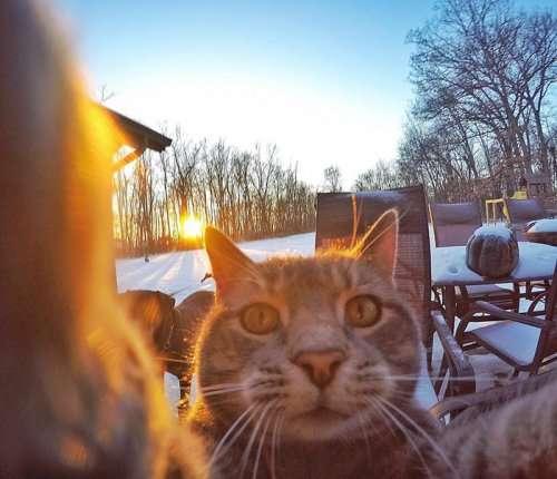 Кот Мэнни, который обожает делать селфи (8 фото)