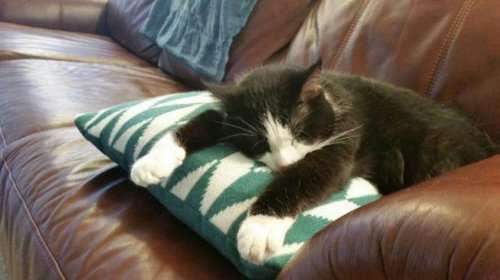 Котики и кошечки, которые вызовут у вас улыбку (29 фото)