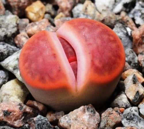 Топ-25: Самые причудливые и уникальные растения