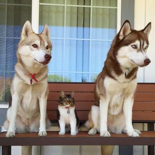 Спасённая кошка Роузи и её лучшие друзья (15 фото)