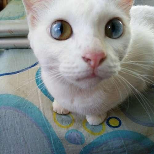 Кошка со Вселенной в глазах (11 фото)