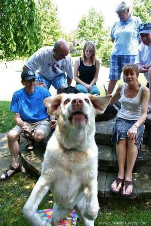 Прикольные фотобомбы с животными (18 фото)