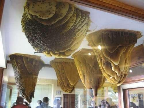 Музей пчёл в Поялес-дель-Ойо (7 фото)