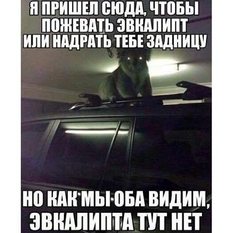 Мемы с животными, которые чем-то недовольны (12 шт)