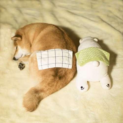 Сиба-ину по кличке Мару спит, подражая плюшевому медвежонку (11 фото)