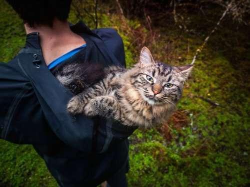 Некогда бездомные котята стали заядлыми путешественниками (15 фото)