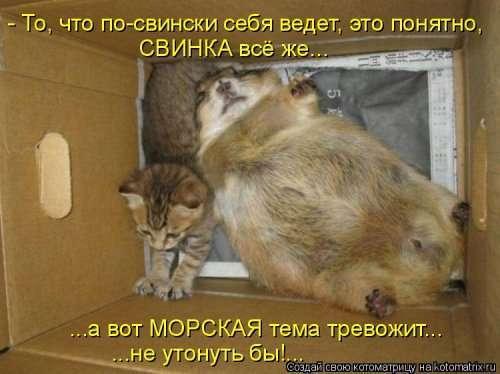 Свежая котоматрица (31 фото)
