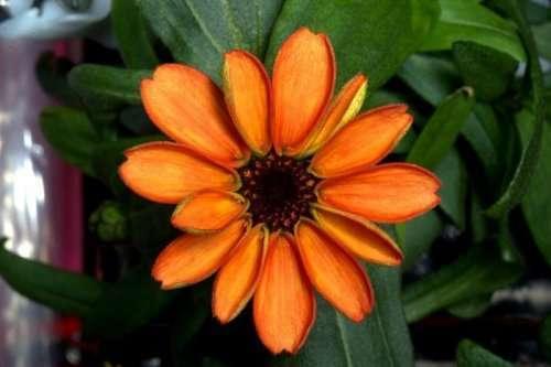 В космосе расцвёл первый цветок (8 фото)