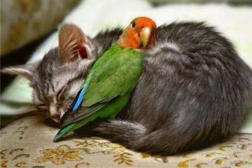 Животные, которые нашли своё тёпленькое местечко (20 фото)