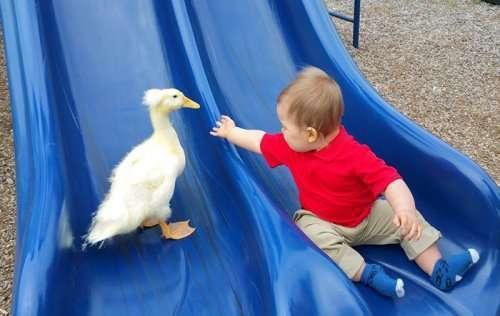 Неразлучные друзья: утёнок Бикер и малыш Тайлер (12 фото)