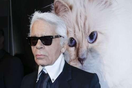 Любимая кошка Карла Лагерфельда заработала в прошлом году 3000000 евро (8 фото)