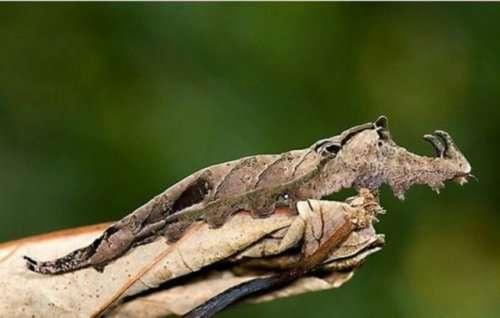 Животные, которые умеют прятаться по-настоящему (25 фото)