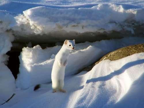 Лучшие фотографии января по версии National Geographic (15 фото)