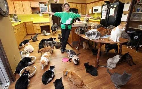 Линеа Латтанцио: женщина, в доме которой живёт более 1000 кошек (7 фото)
