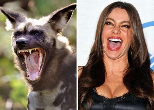 Забавные животные, похожие на знаменитостей (33 фото)