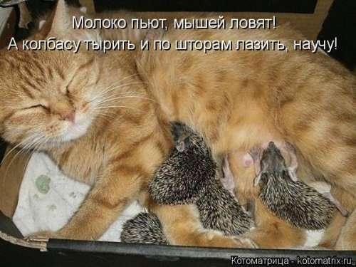Свежая котоматрица (33 фото)