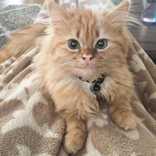 Кошка из приюта не перестаёт улыбаться с тех пор, как обрела новый дом (4 фото)