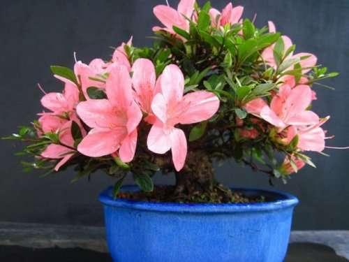 Идеальные растения для каждой комнаты, которые очистят воздух в вашей квартире (10 фото)