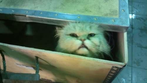 Неожиданный пассажир под капотом (14 фото)