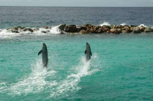 Топ-8: Животные, которые умеют передвигаться по воде