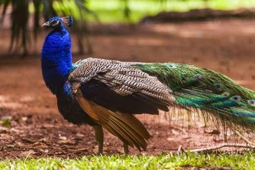 Парк птиц в Бразилии (17 фото)
